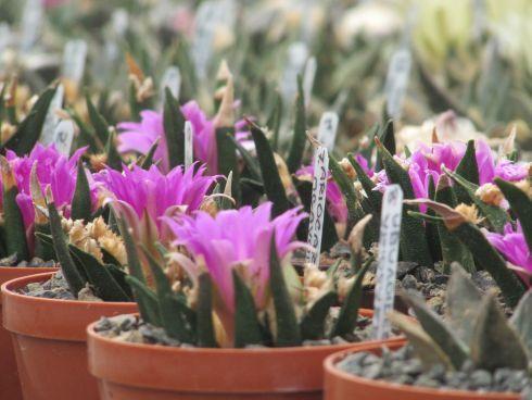 zmenseny-kaktus-jeden.jpg