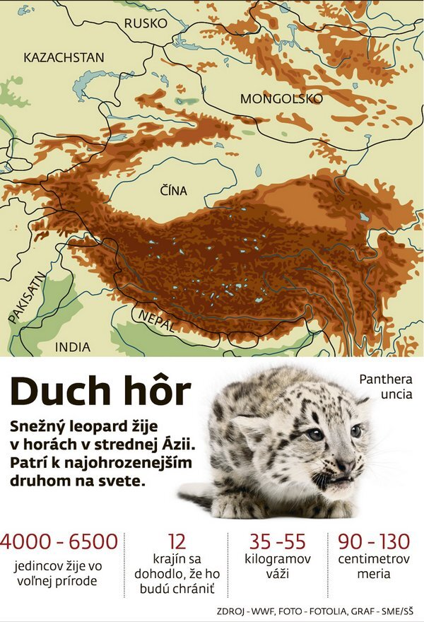 leopard-web_res.jpg