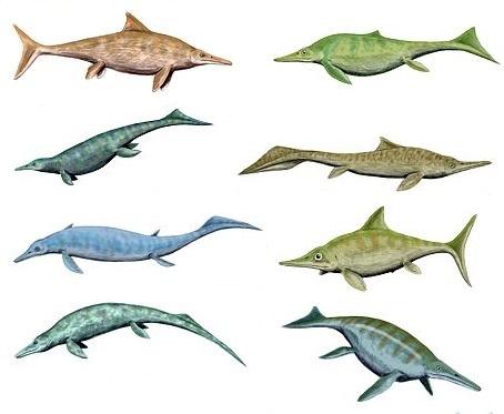 ichthyosaurios5_r4646.jpg