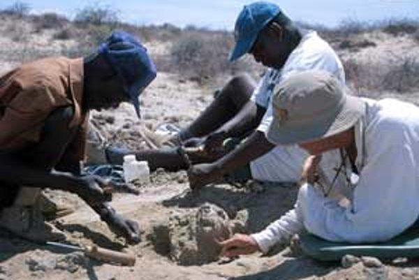 Meave Leakeyová s terénnymi spolupracovníkmi pri uvoľňovaní kusa pieskovca a ílovca, v ktorom sa skrývala najmenšia známa lebka Homo erectus.