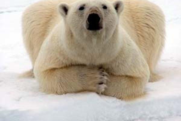 Arktída je ešte stále rajom ľadových medveďov.