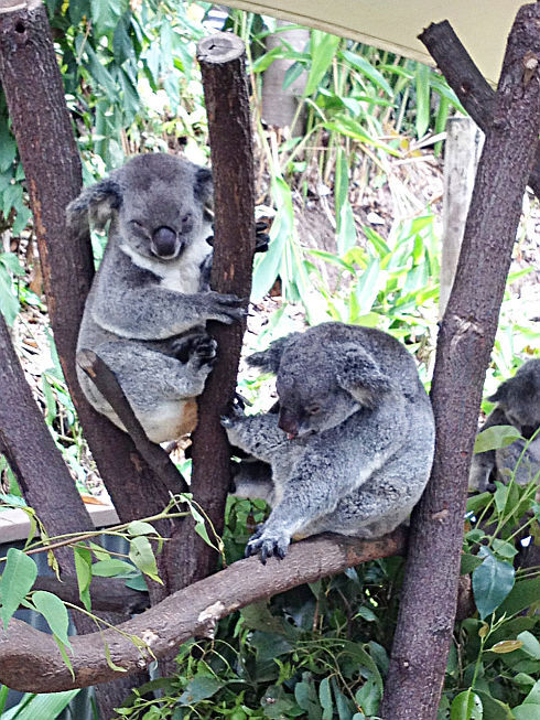 koalaweb_r9002.jpg