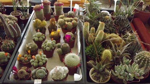 vystava-kaktusov-008_r2171_res.jpg