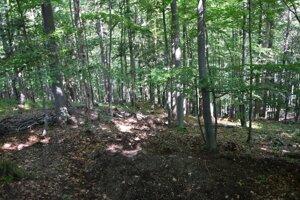 Les, v ktorom sa našli zvyšky tela.