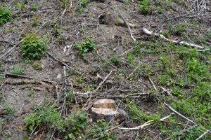 Za Osadným popri ceste vyrúbali desiatky stromov.