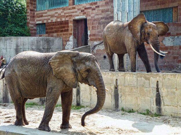 Slonice v ZOO Bojnice