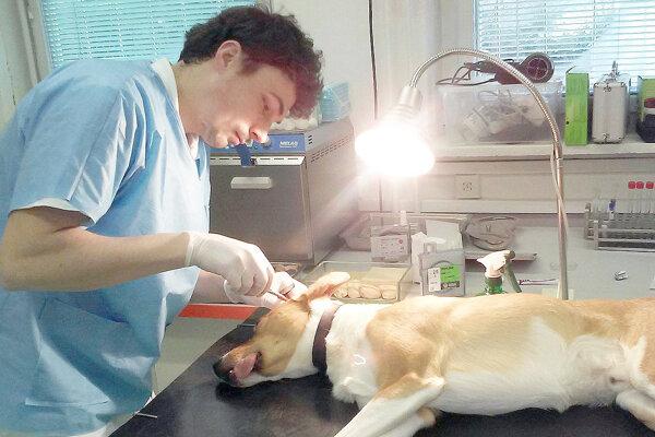U veterinára.