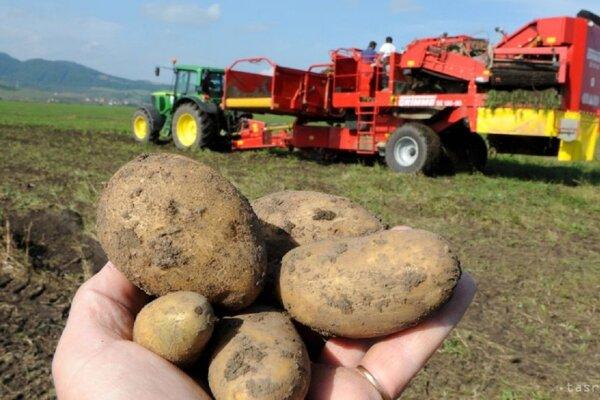 Podľa poľnohospodárov je podpora domácej produkcie zemiakov potrebná.