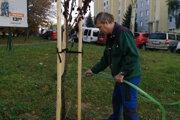 Pracovníci sociálneho podniku v týchto dňoch polievajú novozasadenú zeleň.