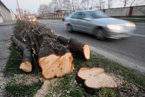 Stromy pri cestách pomaly miznú.