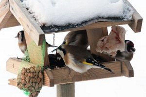 Vtákom môže najviac ublížiť slaná potrava.