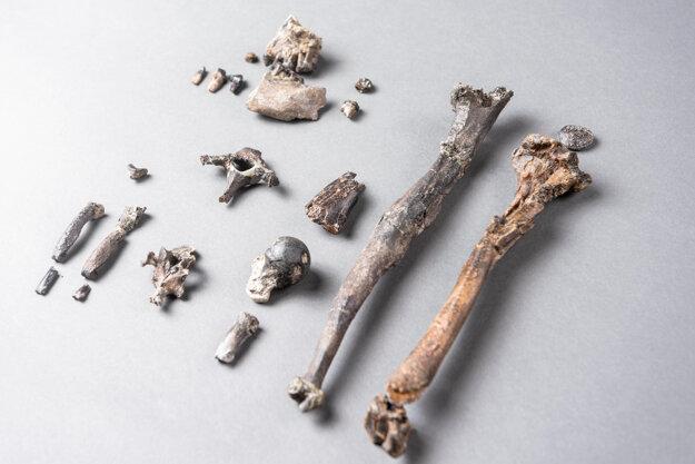 Dvadsaťjeden kostí, ktoré patria predkovi danuvius guggenmosi.