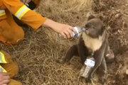 Hasič pomáha koale v austrálskom Cudlee Creek.