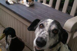 Sany, Cica a Koloman.