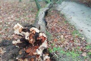 Spadnutý strom.