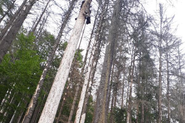 """Aj lesom v Zákopčí zvoní """"umieračik""""."""