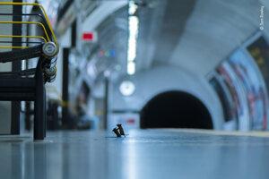 Potýčka na stanici. Výherná fotografia súťaže ukazuje dve myši žijúce v londýnskom metre, ktoré súperia o kúsok jedla.