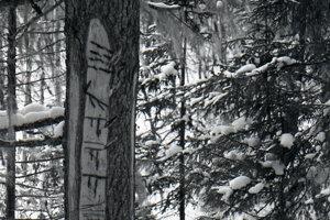 Tajomné značky Mansiov na stromoch.