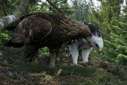 Matka priniesla mláďaťu vretenicu.