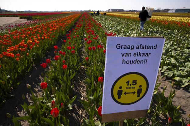 Tulipnánové polia sú prázdne.