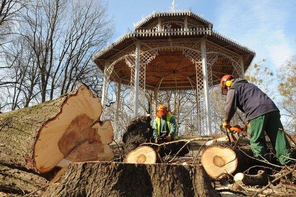 Výrub stromov nový primátor pozastavil.