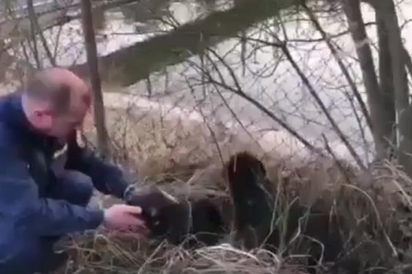 Psy uviazli v nádrži, hasiči ich zachránili.