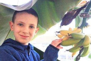Z chutných plodov banánovníka majú na ZŠ J. Kronera všetci radosť.