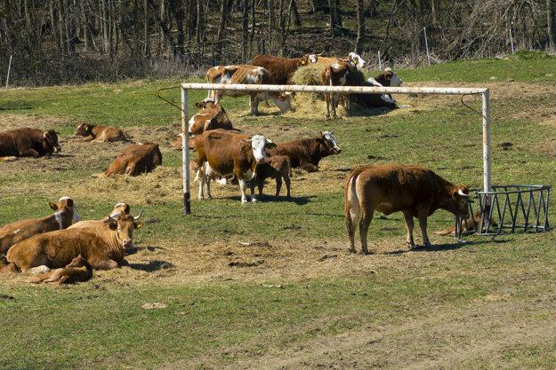Obec Dlhoňa sa nachádza neďaleko slovensko-poľských hraníc v kraji pod Duklou takmer na konci