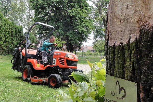 S prvou kosbou mesta začali pracovníci MST 27. apríla na Hviezdoslavovej ulici avMalých Bedzanoch. Bodku za ňou dali 14. mája vmestskom parku.