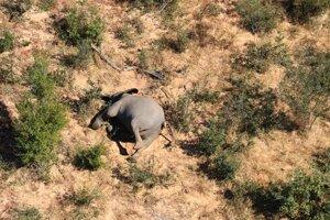 Príčina úmrtia zvierat nie je známa.