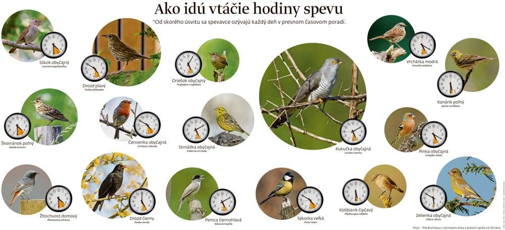 Vtáčie hodiny spevu pre čas s východom slnka o šiestej hodine rannej v polovici apríla.