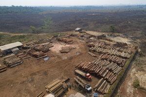 Odlesňovanie brazílskeho amazonského pralesa sa v prvej polovici roka 2020 zvýšilo o rekordných 25 percent v porovnaní s tým istým obdobím v minulom roku.