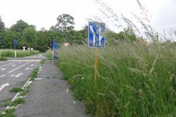 Deti by sa v takejto húštine úplne stratili, tráva má skoro dva metre.