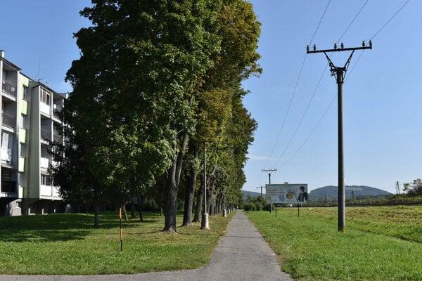 Orezanie stromov na Puškinovej ulici zabezpečila spoločnosť Východoslovenská distribučná.