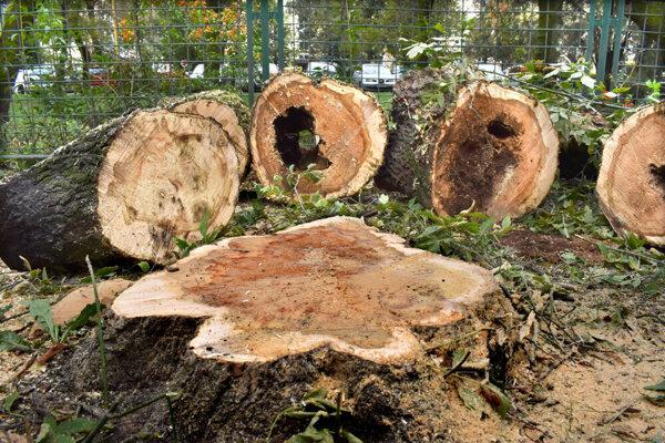 Podľa starostu Ténaia i poslanca Rovinského je v Košiciach nevyhnutná postupná obnova zelene.