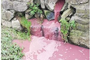 Znečistený potok v Soblahove.