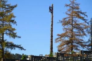 Zo stromu ostala časť, z ktorej obec plánuje nechať vyrezať drevenú sochu.
