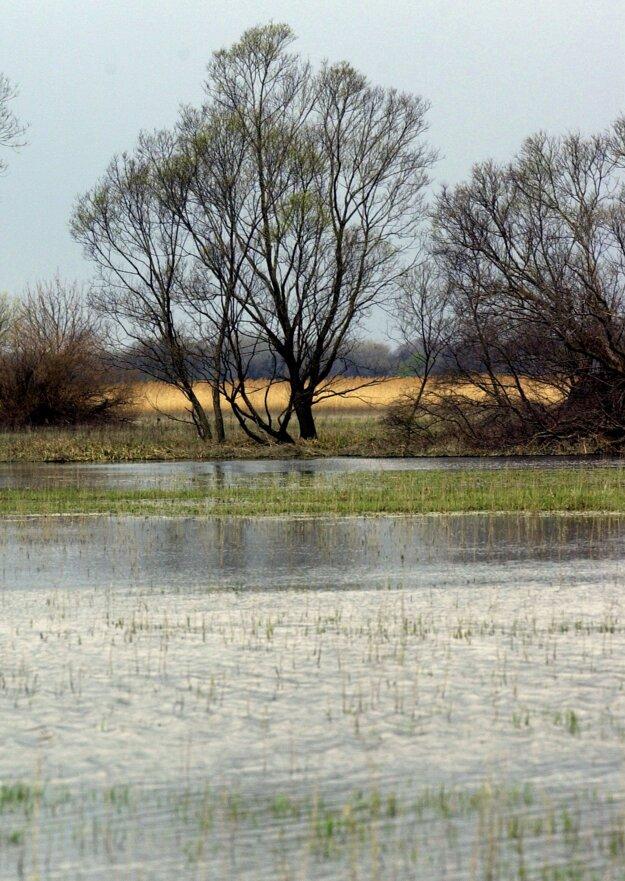 Zaplavené lúky priľahlej nivy rieky Moravy každoročne vytvárajú dočasné jazerné plochy, ktoré nesú názov Devínske jazero.