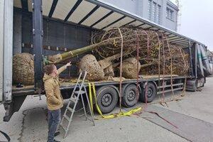 Stromy priviezli na kamiónoch. A znova neskôr odviezli preč.