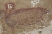 Jaskynná maľba prasaťa celebského na Sulawesi.