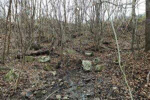 Okolie studničky na Štáloch je zarastené drevinami.