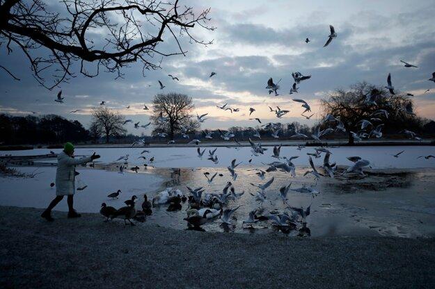 Žena kŕmi vtáky pri zamrznutom jazierku na juhozápade Londýna.