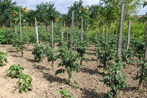 Farmári odhalia, čo spôsobila zima, po začiatku jarných prác.
