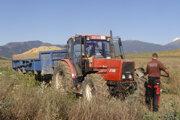 Najväčší pestovateľ sadbových zemiakov na Slovensku je  Poľnohospodárske družstvo v podhorskej obci Smrečany. Na fotografii zber zemiakov na poli pri akvaparku neďaleko Liptovského Mikuláša.