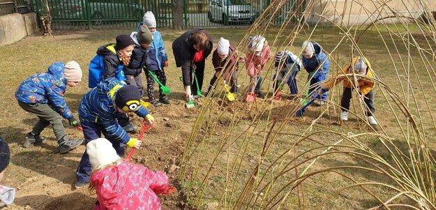 Deti z Materskej školy Ipeľská v Košiciach, z triedy mravčekov a včielok, pri budovaní vŕbového úkrytu.