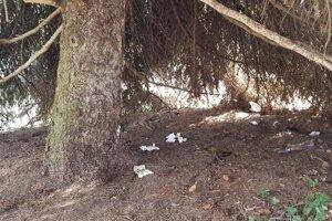 Niektorí vykonajú potrebu priamo na námestí - pod stromami.