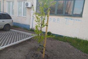 Po obvode parkoviska vysadili stromy. Narátali sme tri.