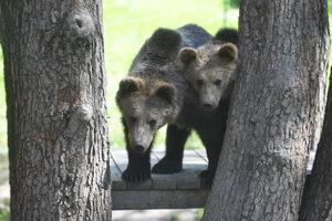 Medvede hnedé Máša a Filip.
