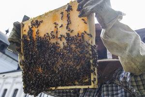 Kontrola plástov úľov v Prezidentskej záhrade.