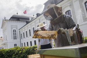 Zber prvej úrody medu v Prezidentskej záhrade.
